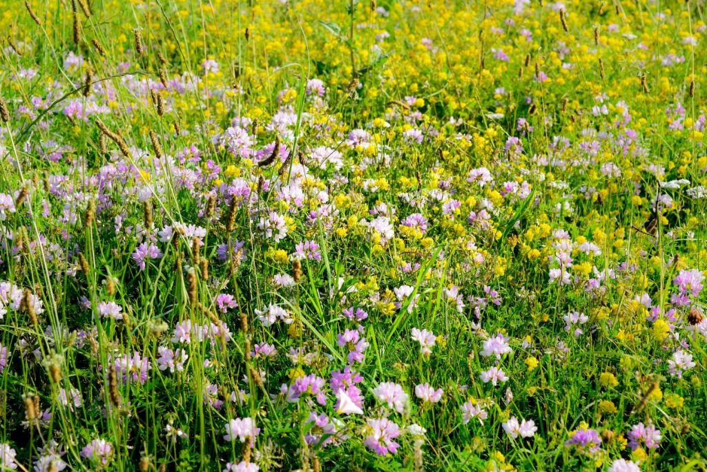 Поляни с цветя