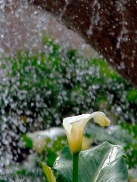 Agua Flor - Photo Manny Rocca