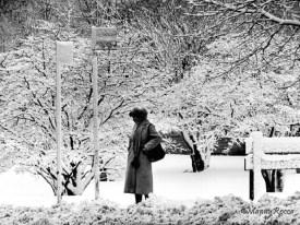 Snow Storm - Photo Manny Rocca