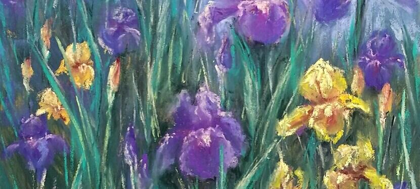 Pastel Iris Patch