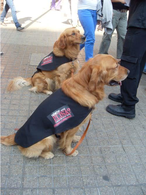 perros-elisa-2
