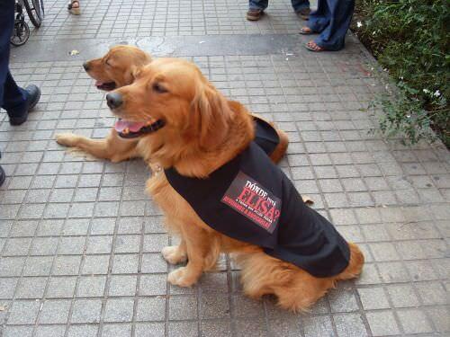 perros-elisa