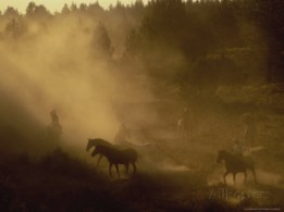 Cowboys participating in a wild horse roundup;  Photo by: B & C Gillingham