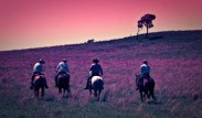 Riders of the Purple Sage By: Greg Martin,