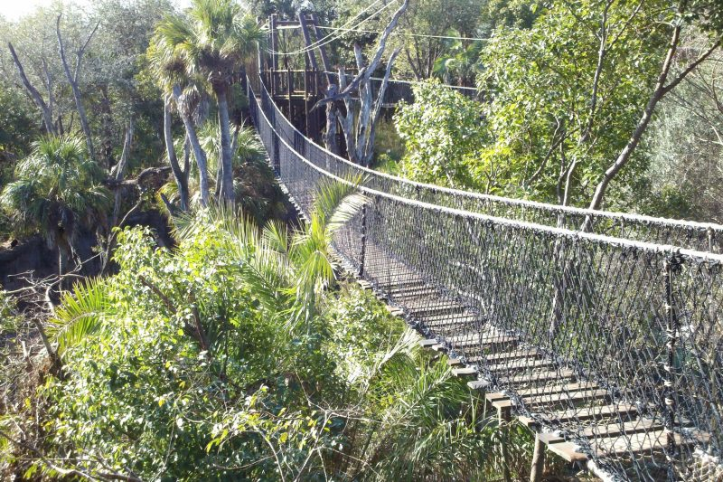 Wild Africa Trek rope bridge
