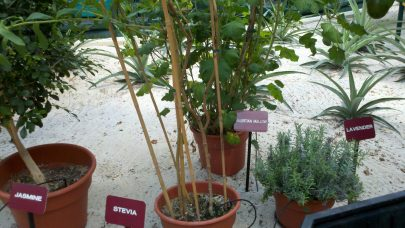 Behind the Seeds Tour tea garden