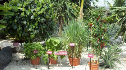 Behind the Seeds Tour spice garden