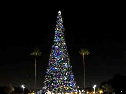 Disney's Hollywood Studios Tree