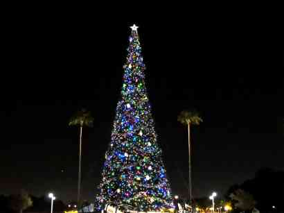 Disney's Hollywood Studios Tree