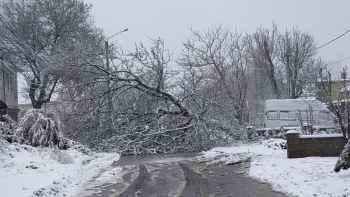 упало дерево Ромашковая