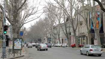 улица, деревья