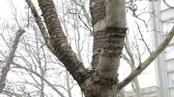 гирлянда на дереве2