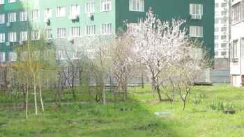 цветущие деревья у дома