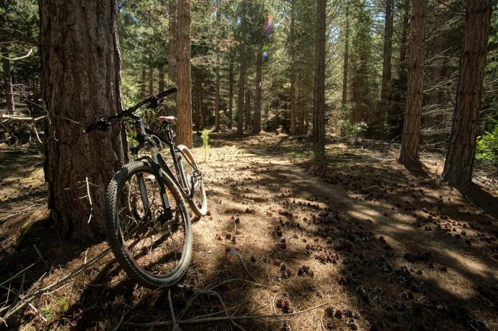 Miestne lesy sú Mekkou pre horských cyklistov