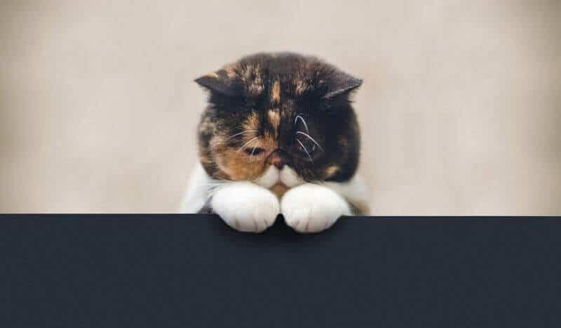 Что делать при запоре у кошки: помощь животному