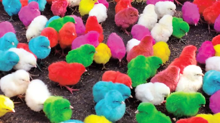 hen-chick-colorfull