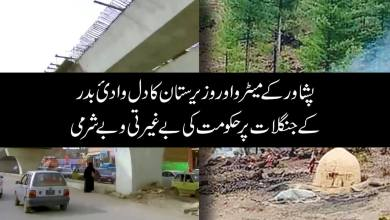 the-shameful-role-of-smuggling-coal-from-the-heart-of-waziristan-the-forests-of-badr-valley-to-afghanistan-continues-with-great-shamelessness-in-imran-khans-government