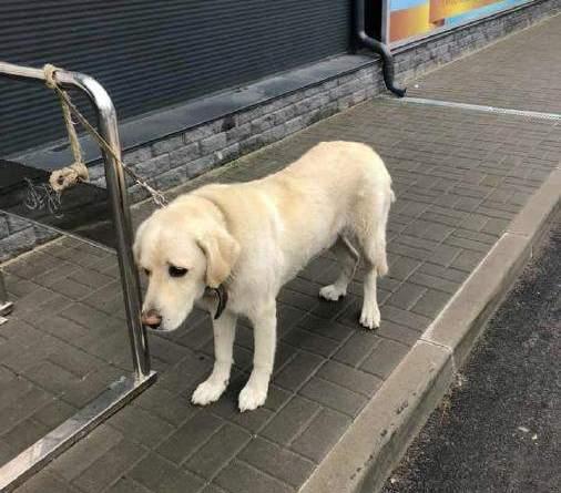 Київщина: Горе-господар залишив собаку біля магазину, бо хотів спати