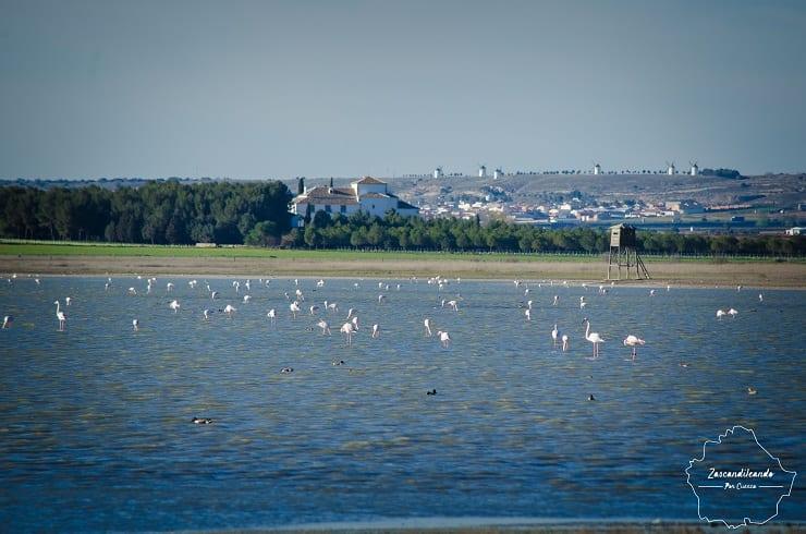 Laguna de Manjavacas con aves