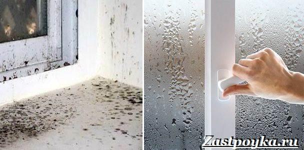Грибок-на-стенах-Как-избавиться-от-грибка-на-стенах-3