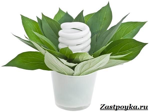 Энергосберегающие-лампы-Описание-характеристики-цены-и-как-выбрать