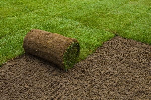Рулонный-газон-Особенности-виды-укладка-и-цена-рулонного-газона-1