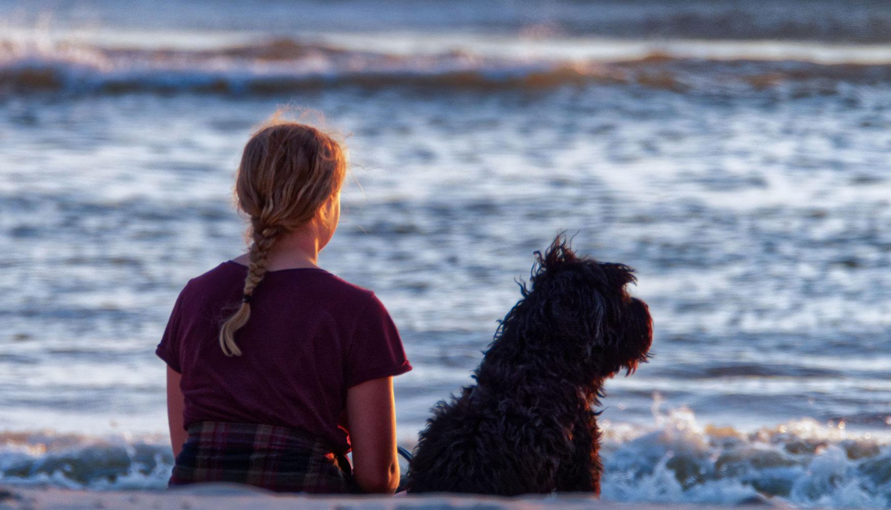 Voyager avec son chien aux USA: Les assurances