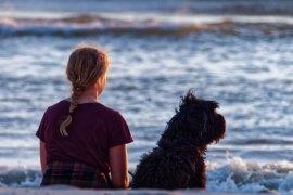 chien au bord de l'eau