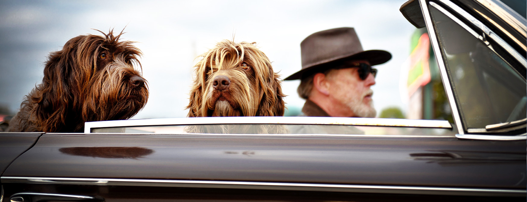 Voyager avec son chien aux États-Unis: santé et vaccination.
