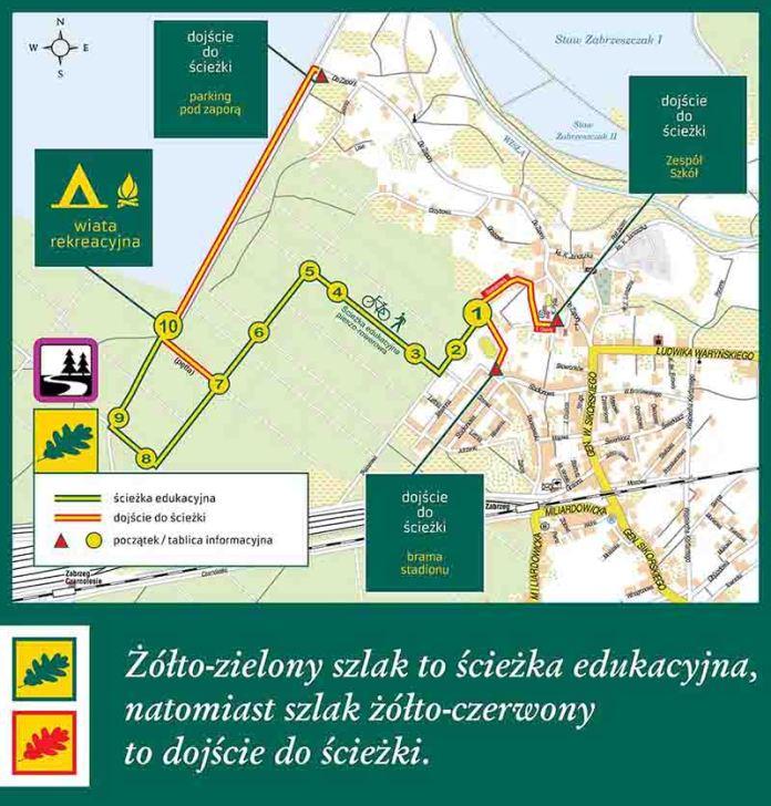 ścieżka leśna w Zabrzegu