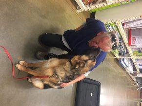 Dog training client review zauberberg