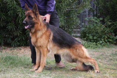 Yeti (61)