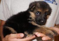 Piper (8)