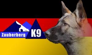German German Shepherd breeder Tucson