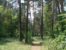 дендрарий шадринск - кузнецова светлана 4