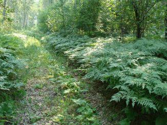 мелколиственный лес у с черемисское - александр зырянов 5