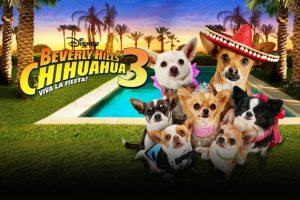 BEVERLY HILLS CHIHUAHUA 3: VIVA LA FIESTA Blu-Ray/DVD Giveaway