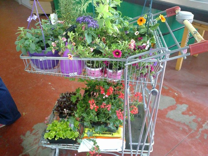 Decor Jardin
