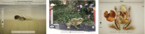 30-Froggipedia-600x144-1