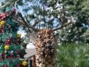 Paragwajski renifer
