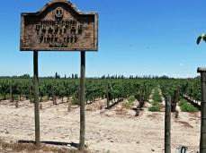 winnice pod Mendozą
