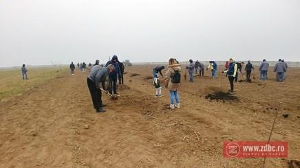 plantare pomi barrier electric plus bacau (6)