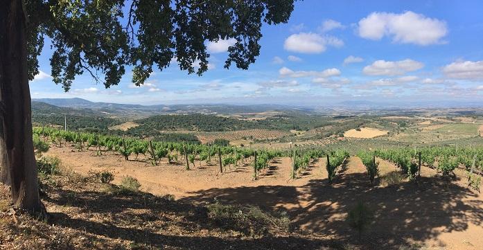 Valle Pradinhos_Vineyard