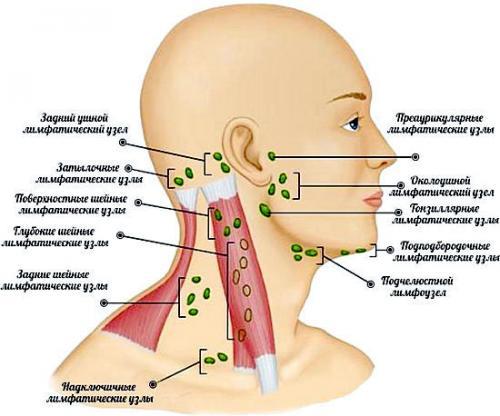 Компрессы при воспалении лимфоузлов на шее. Лимфоузлы на шее — расположение, фото