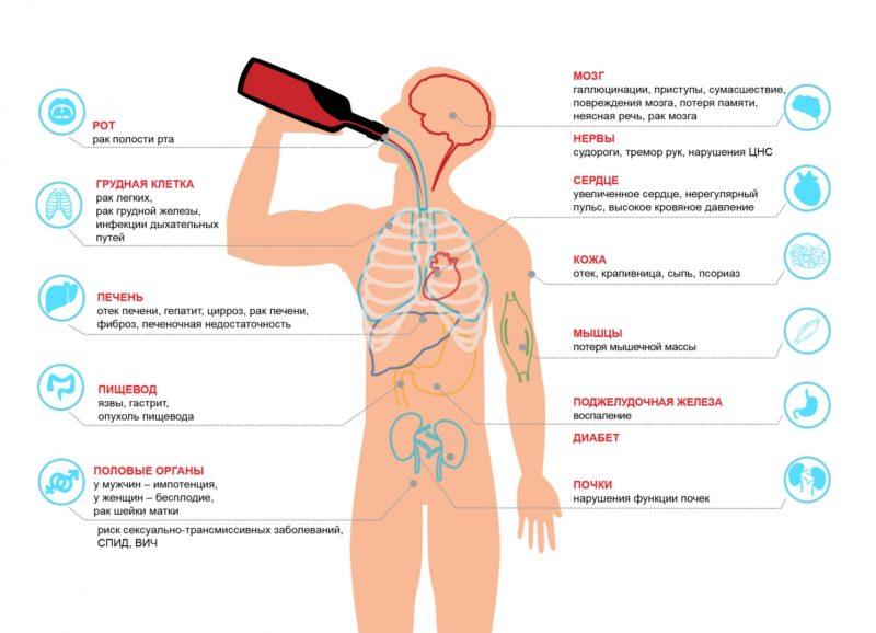 L'effet de l'alcool sur le corps