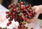 crvena tresnja lijek iz prirode