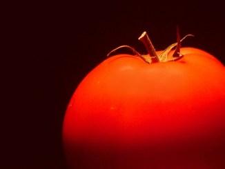 ГМО домат