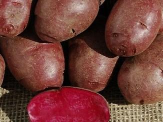 лилав картоф