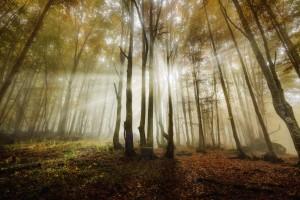 Sun bihind the trees-Edit