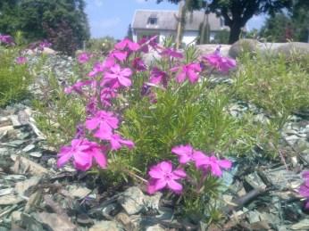 kwiaty mojego ogrodu